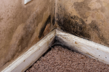 mold services miami