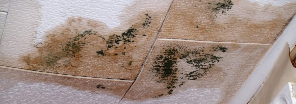 Mold Remediation Miami