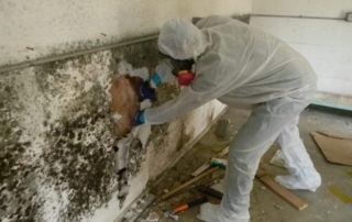 mold clean-up