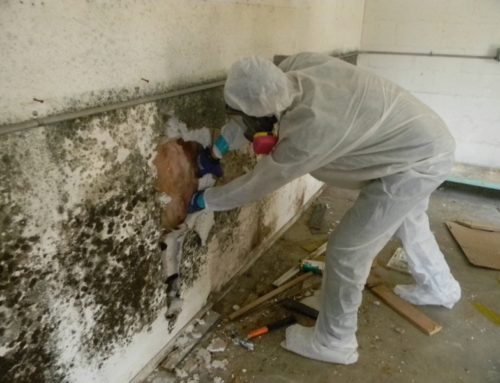 Mold Clean-Up: Step-By-Step